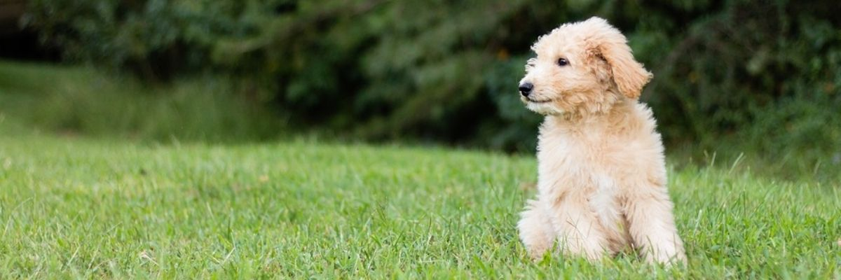 4 Commands and Tricks to Teach the Dog