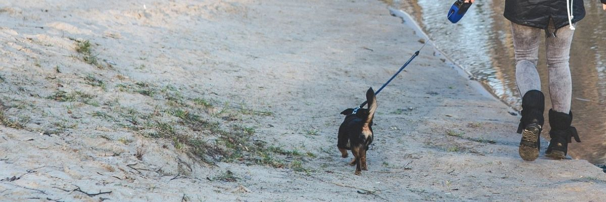 How do I get my dog to walk nicely on a leash?